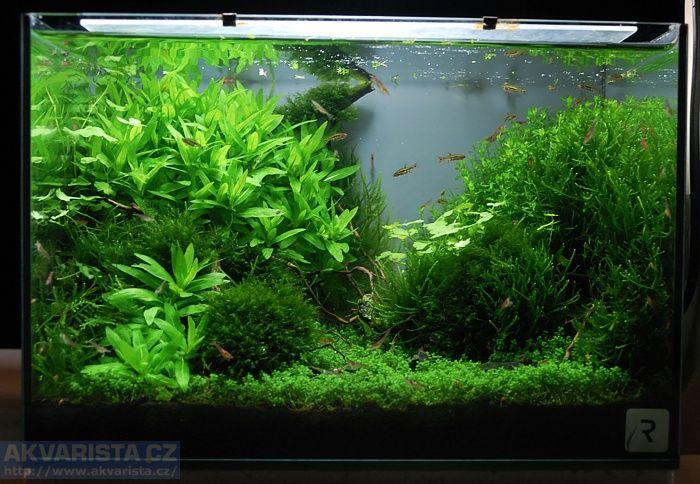 Flexiobklady akvarium